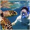 actv Snorkeling copy - Trip Planner PVS Test