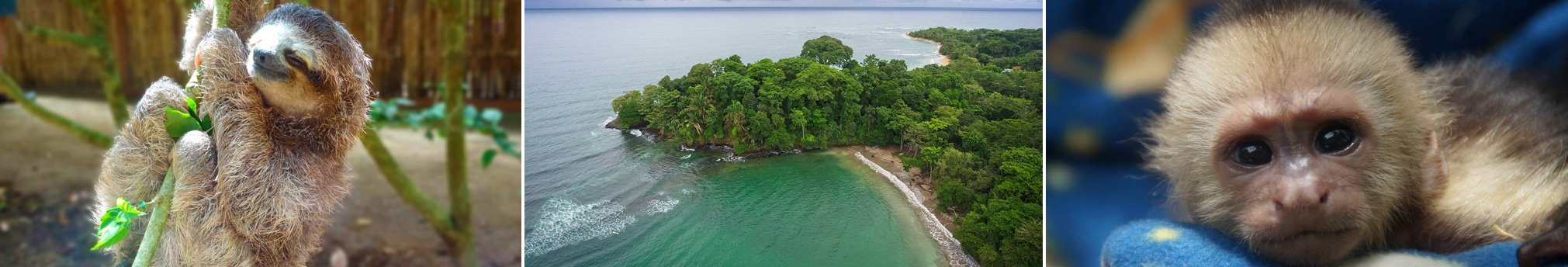 Monday's & Wednesday's Tour of the day! Jaguar Animal Rescue Center and Punta Uva Beach & Jungle Hike