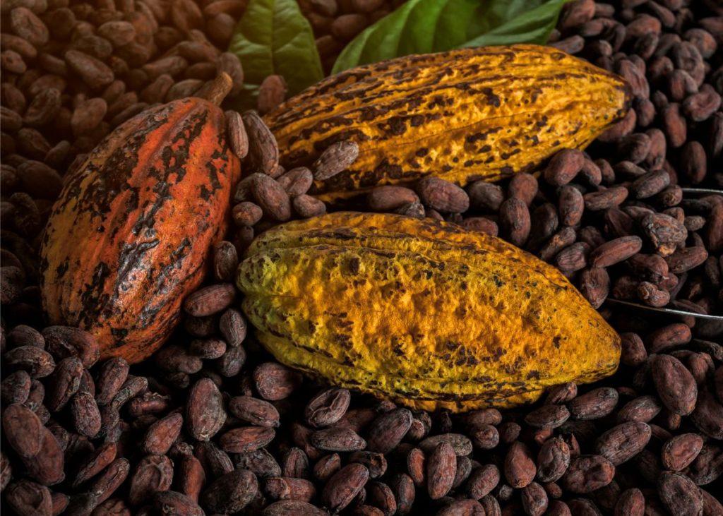 cacao tour chocolate